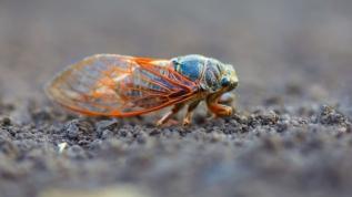 Virüs ve katil arılardan sonra yeni tehdit! ABD'yi istilaya hazırlanıyor