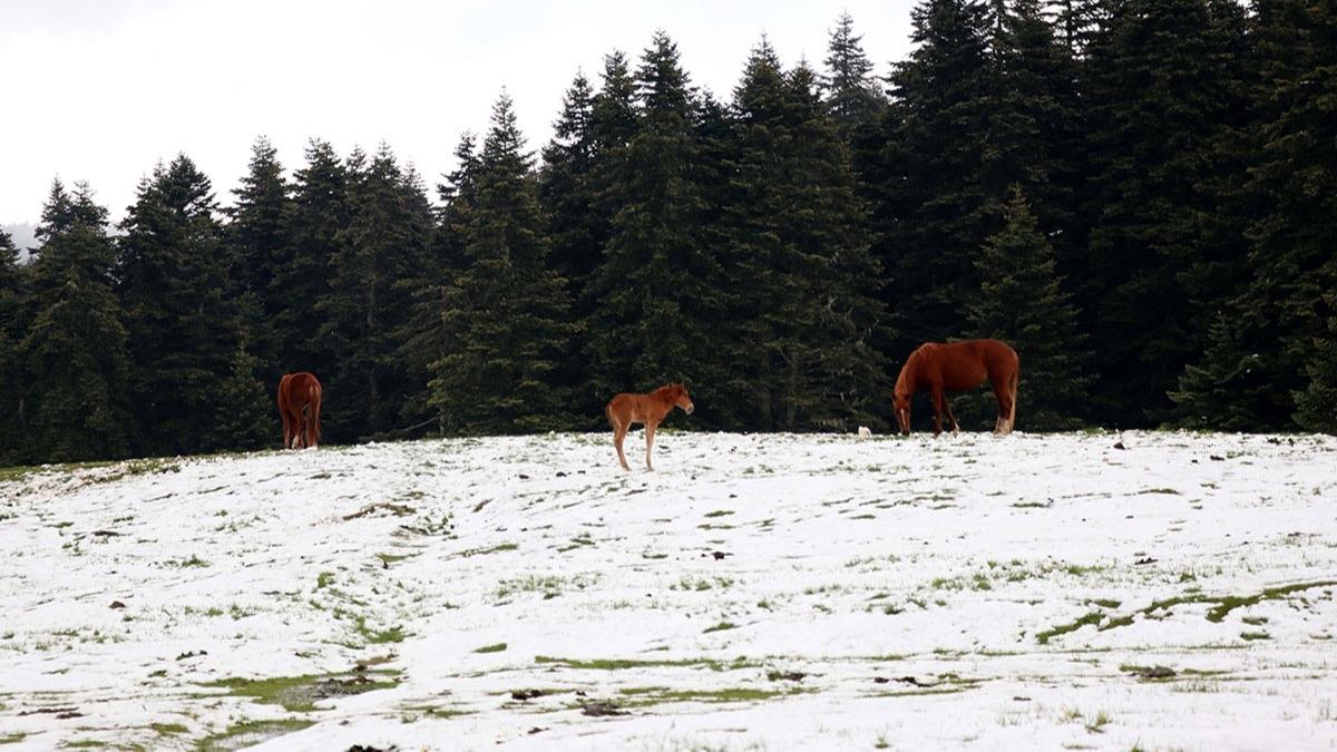 Bolu'da yaz başında kar yağdı!