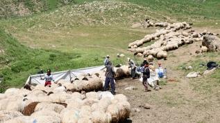 Terörden arındırılan yaylalar göçerlerle dolup taşıyor