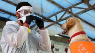 İran'da köpekler Kovid-19'u teşhis etmek için eğitildi