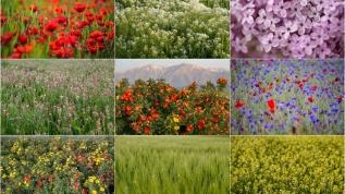 Rengarenk çiçekler doyumsuz manzaralar oluşturdu