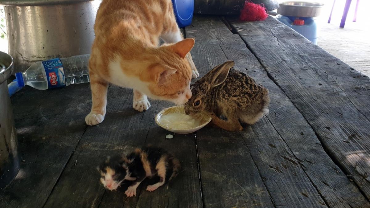 Kendi yavrularından ayırmadı...