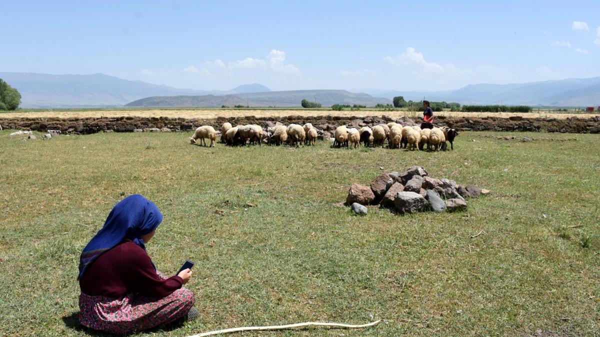 Muşlu kız kardeşler, hayvanlarını otlatırken derslerini EBA'dan takip ediyor