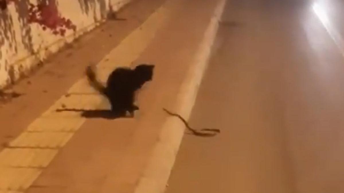 Sokak kedisi ile yılanın ilginç kavgası!
