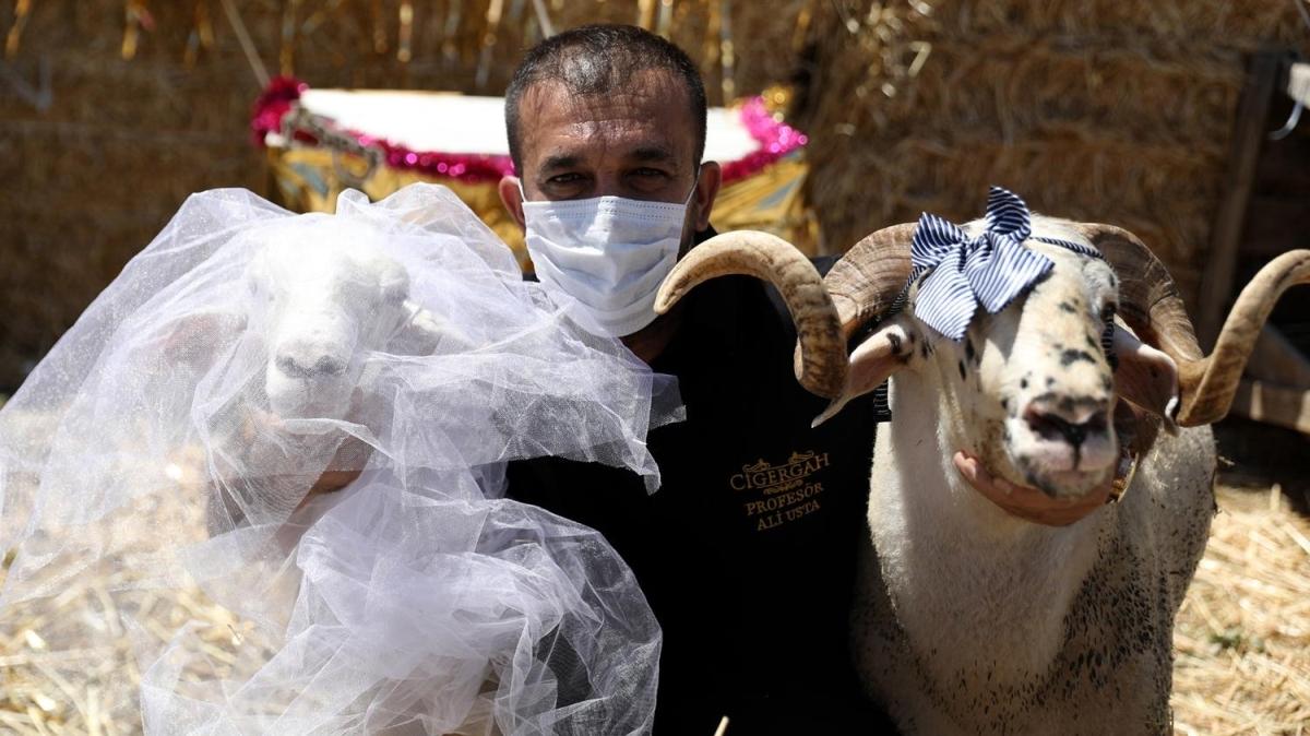 Kuzu Sultan'a davullu zurnalı düğün