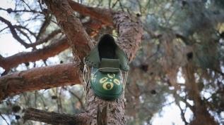 Giyilmeyen ayakkabılar kuşların yeni yuvası oldu