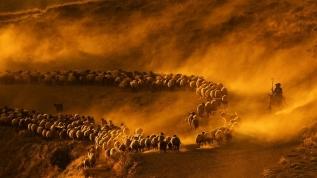 Fotoğraflamak için kilometrelerce yol kat ediyorlar! 'Tozlu' yolculuğa yoğun ilgi