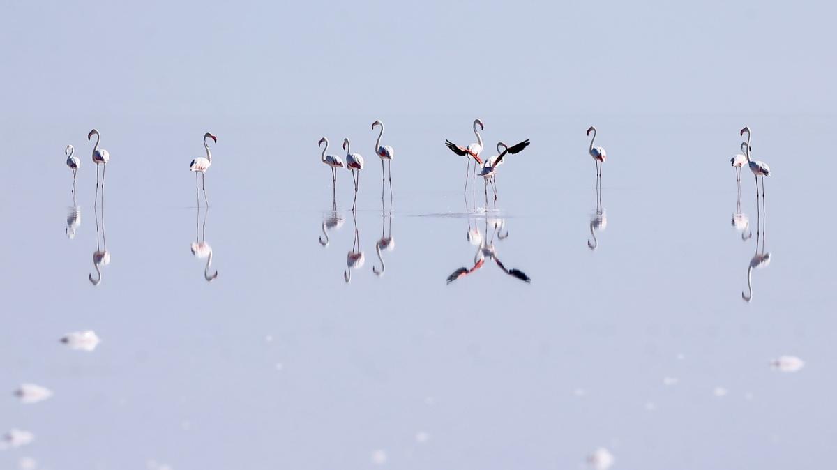 Tuz Gölü'nde görsel şölen! Binlercesine ev sahipliği yapıyor