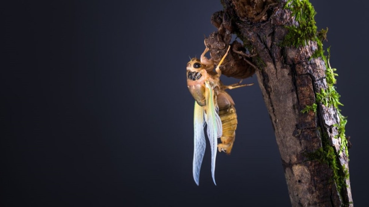 Zihinleri kontrol edebiliyor! Koronavirüsün ardından zombi böcek tehlikesi