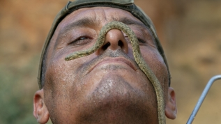 Tunuslu 'yılan avcısı'