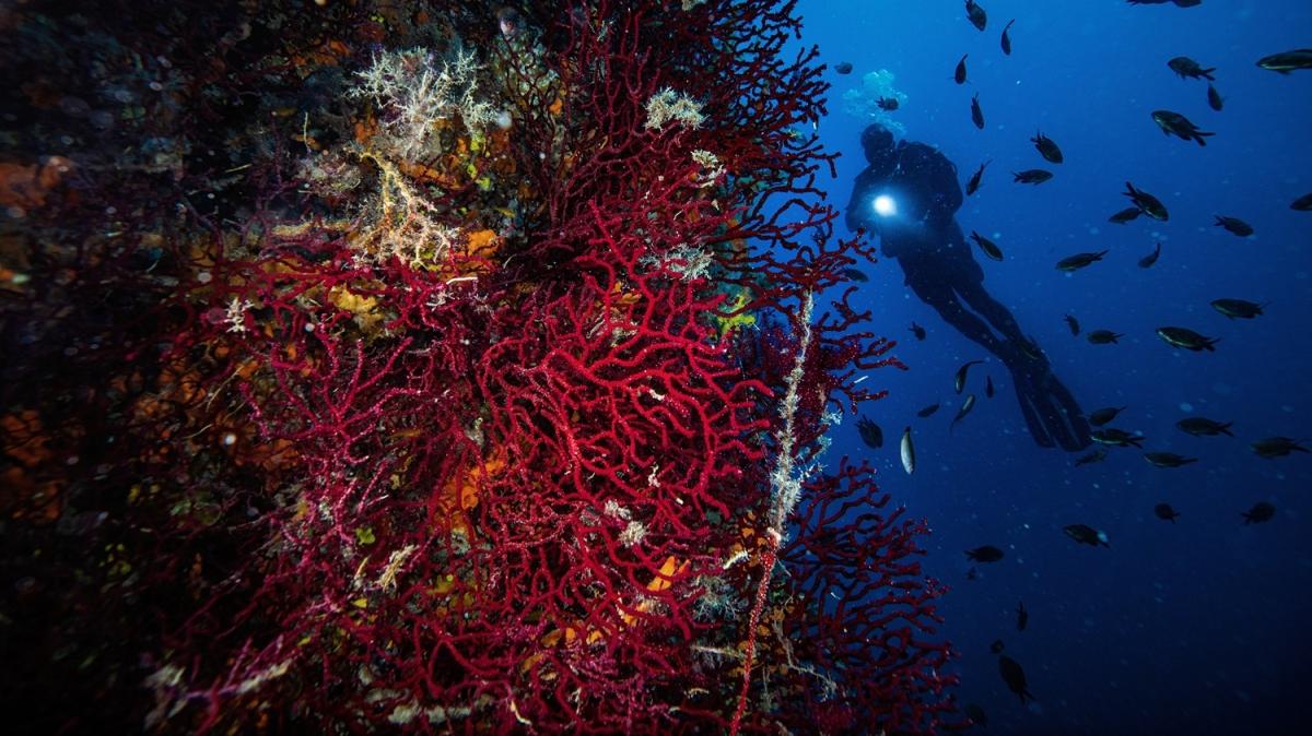 Kırmızı Mercanlar görenleri kendine hayran bıraktırıyor