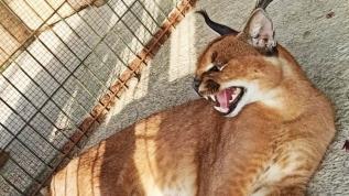 Hayvan kaçakçılarına operasyon!
