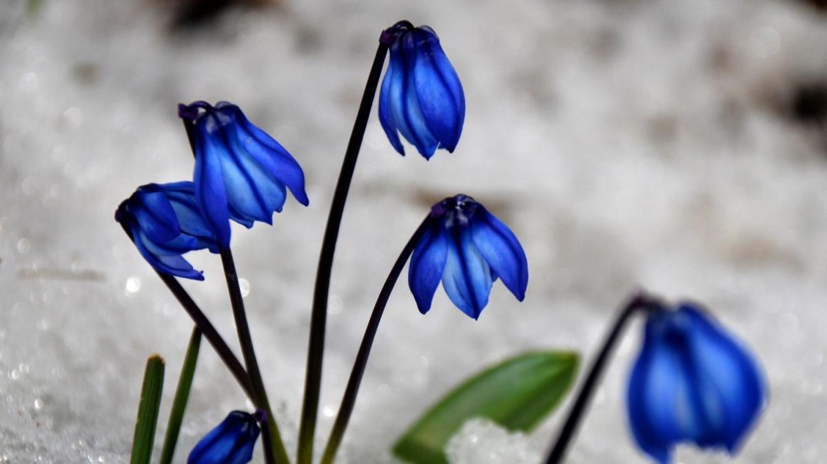 Karlar erimeye, doğa canlanmaya başladı...