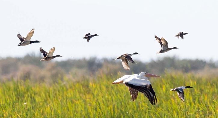 'Salton Denizi' kuruyor, göçmen kuşlar evsiz kalacak