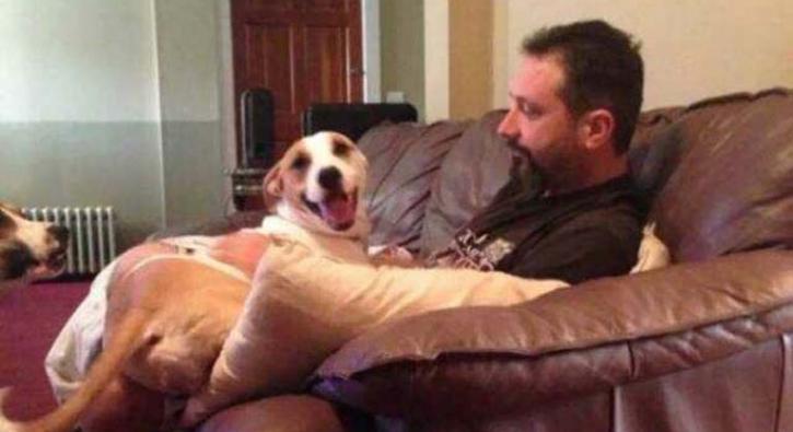 Babaların kalbini fetheden sevimli köpekler
