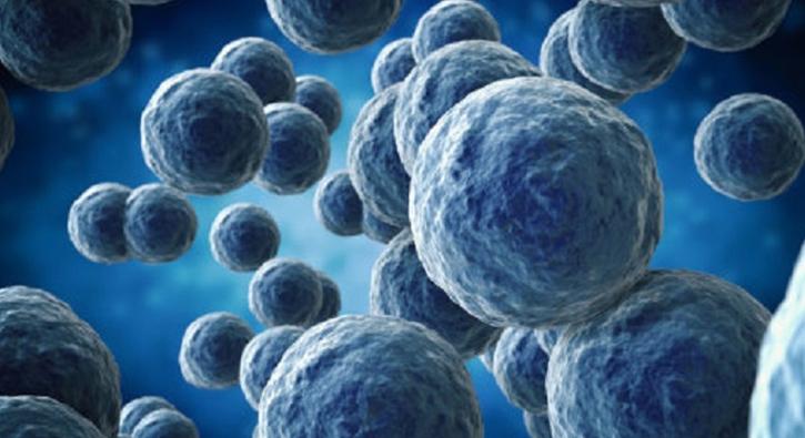Bilim dünyasından müthiş keşif: Mikroplardan elektrik üretilecek