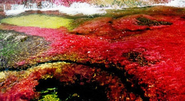 Beş renkli nehir görenleri büyülüyor