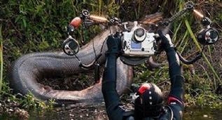 36 metre uzunluktaki yılan korkuttu