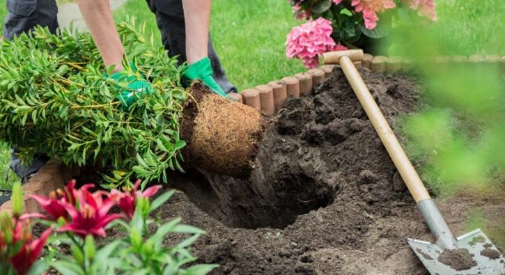 Saray'a bahçıvan aranıyor, 25 bin sterlin maaş!