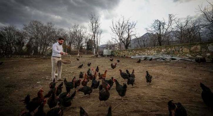 'Mozart' dinleyen tavukların üretimi yüzde 20 arttı