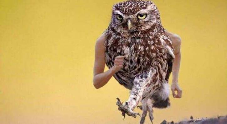 Photoshopla hayvanları bakın ne hale soktular