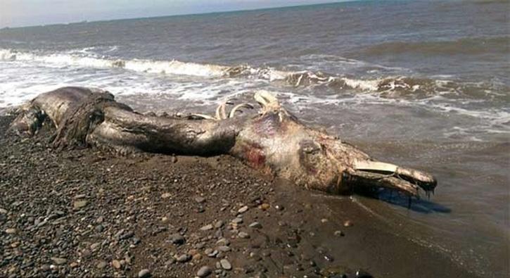 Denizden çıkan bu yaratıklar korkuttu