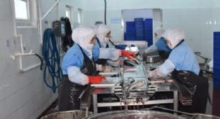 Dinar'da tütsülenen balıklar Avrupa sofralarında