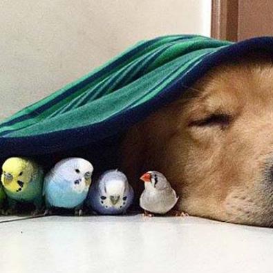 1 Köpek, 8 Kuş ve 1 Hamster; Müthiş bir dostluk hikayesi