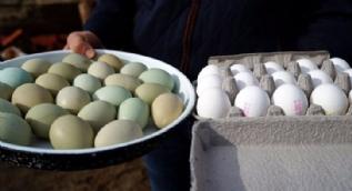 Köyünde yeşil yumurta üreten kadın taleplere yetişemiyor