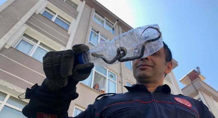 İstanbul'da bir daireye yılan girince olanlar oldu!