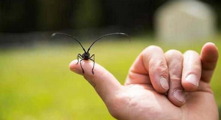 Görürseniz uzak durun! Dünyanın en ölümcül canlıları