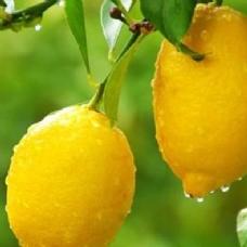 Kabuğu soyulmuş bir limon yerseniz...
